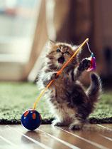 超萌可爱小猫黛西 - iPad高清动物壁纸